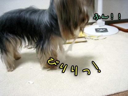 7_20090803151835.jpg
