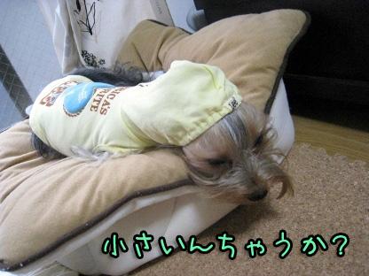 7_20090807144216.jpg
