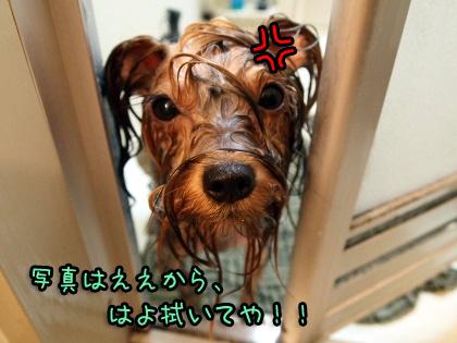 7_20090810183059.jpg