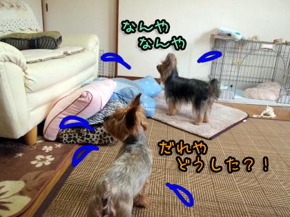 7_20090813183438.jpg