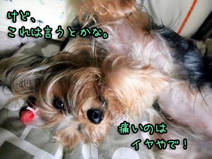 7_20090821161629.jpg