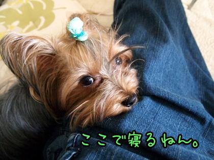 7_20090829170321.jpg