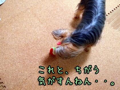 7_20090915193549.jpg
