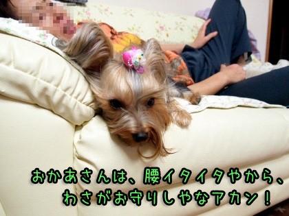 7_20090924200337.jpg