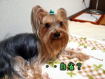 7_20090930180547.jpg