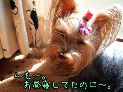 7_20091018175029.jpg