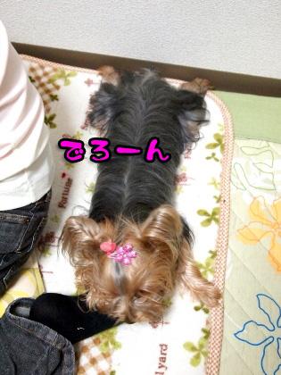 7_20091024192442.jpg