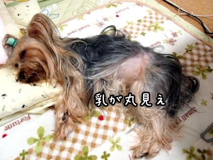 7_20091026192855.jpg