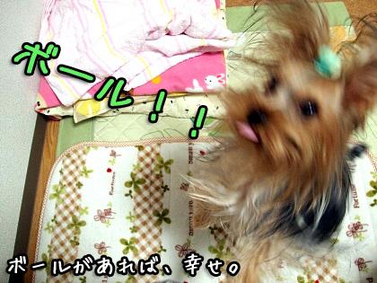 7_20091102181558.jpg