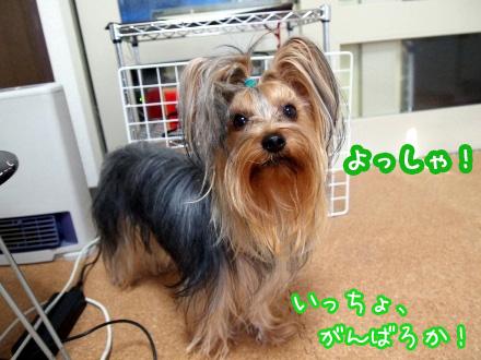 7_20091207173032.jpg