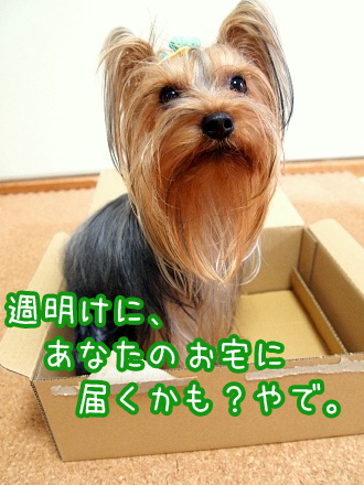 7_20091212193433.jpg