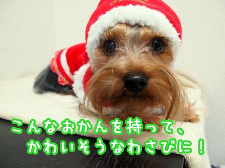 7_20091218193204.jpg