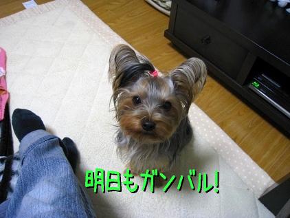 8_20090119205214.jpg
