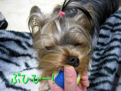 8_20090211141332.jpg