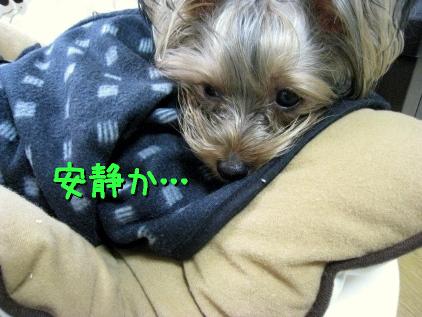 8_20090225132940.jpg