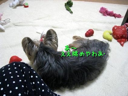 8_20090301113903.jpg
