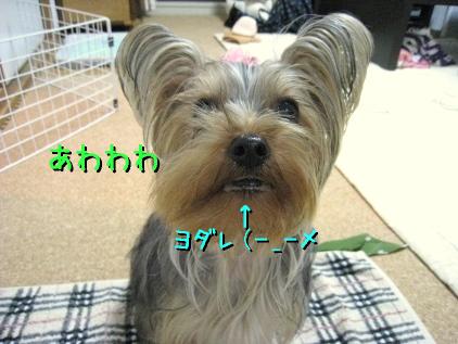 8_20090302202559.jpg