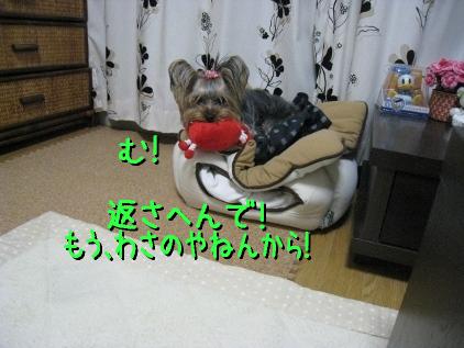 8_20090305183152.jpg