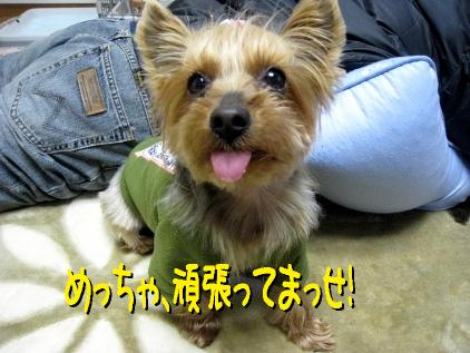 8_20090323175135.jpg