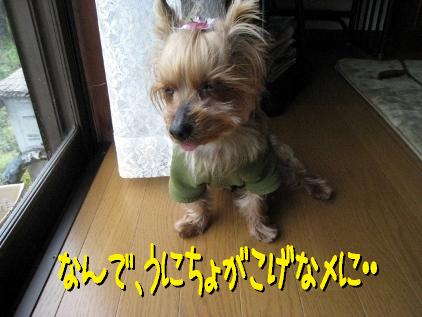 8_20090324192510.jpg