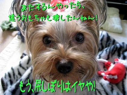 8_20090329174341.jpg
