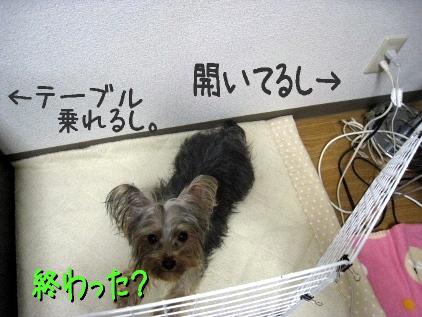 8_20090404190759.jpg