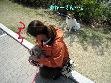 8_20090408154721.jpg