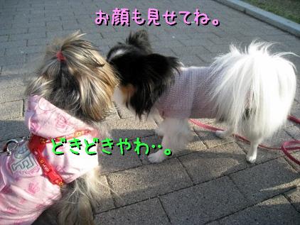 8_20090410213121.jpg