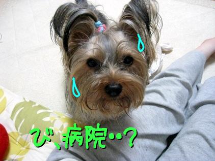 8_20090420183455.jpg