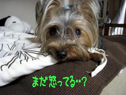 8_20090424182349.jpg
