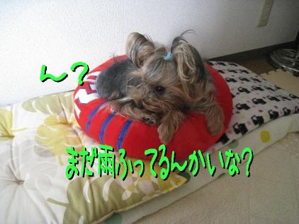 8_20090425195337.jpg