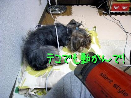 8_20090426143101.jpg