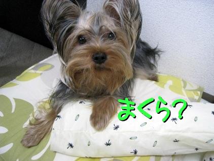 8_20090508200539.jpg