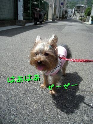 8_20090515190033.jpg