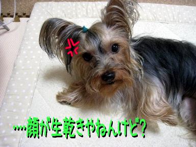 8_20090520173358.jpg
