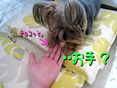 8_20090524153118.jpg