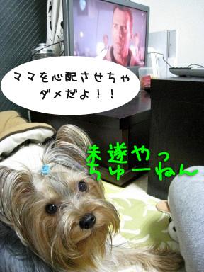8_20090530210317.jpg