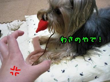 8_20090603150236.jpg