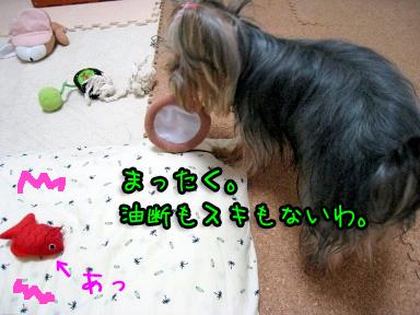 8_20090604185659.jpg