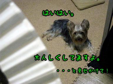 8_20090608191848.jpg