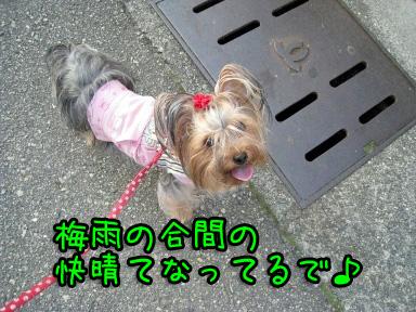 8_20090611193810.jpg