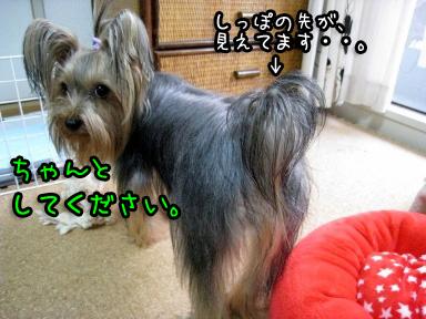 8_20090612172218.jpg