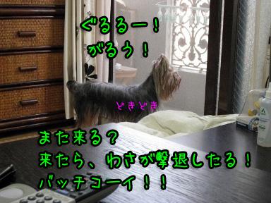 8_20090615185037.jpg