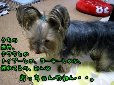 8_20090616192104.jpg