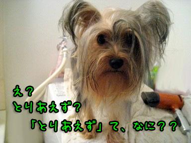 8_20090628122506.jpg