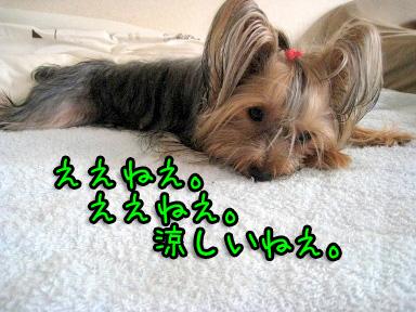 8_20090702194724.jpg