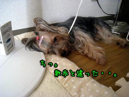 8_20090719193428.jpg