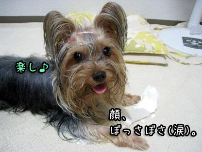 8_20090803151835.jpg