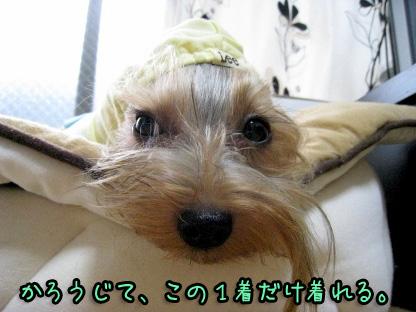 8_20090807144217.jpg
