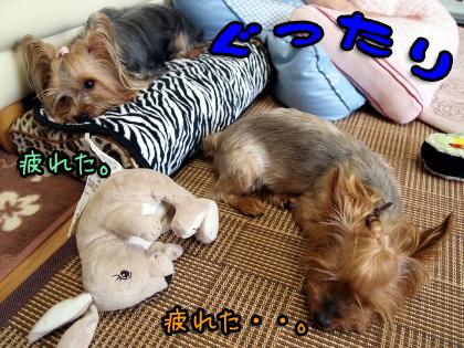 8_20090813183439.jpg